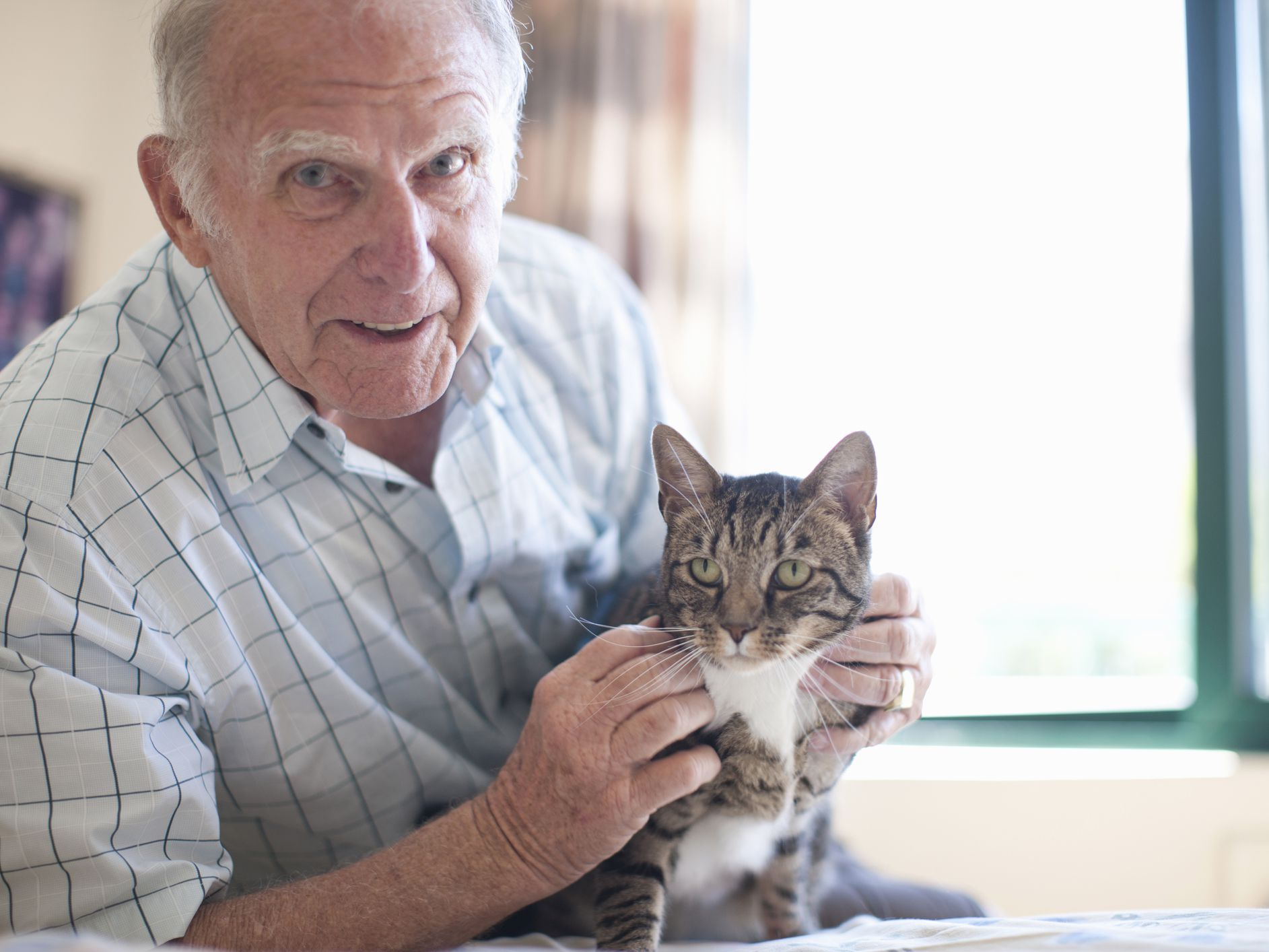 How Long Can A Cat Live With A Tumour  Pictures
