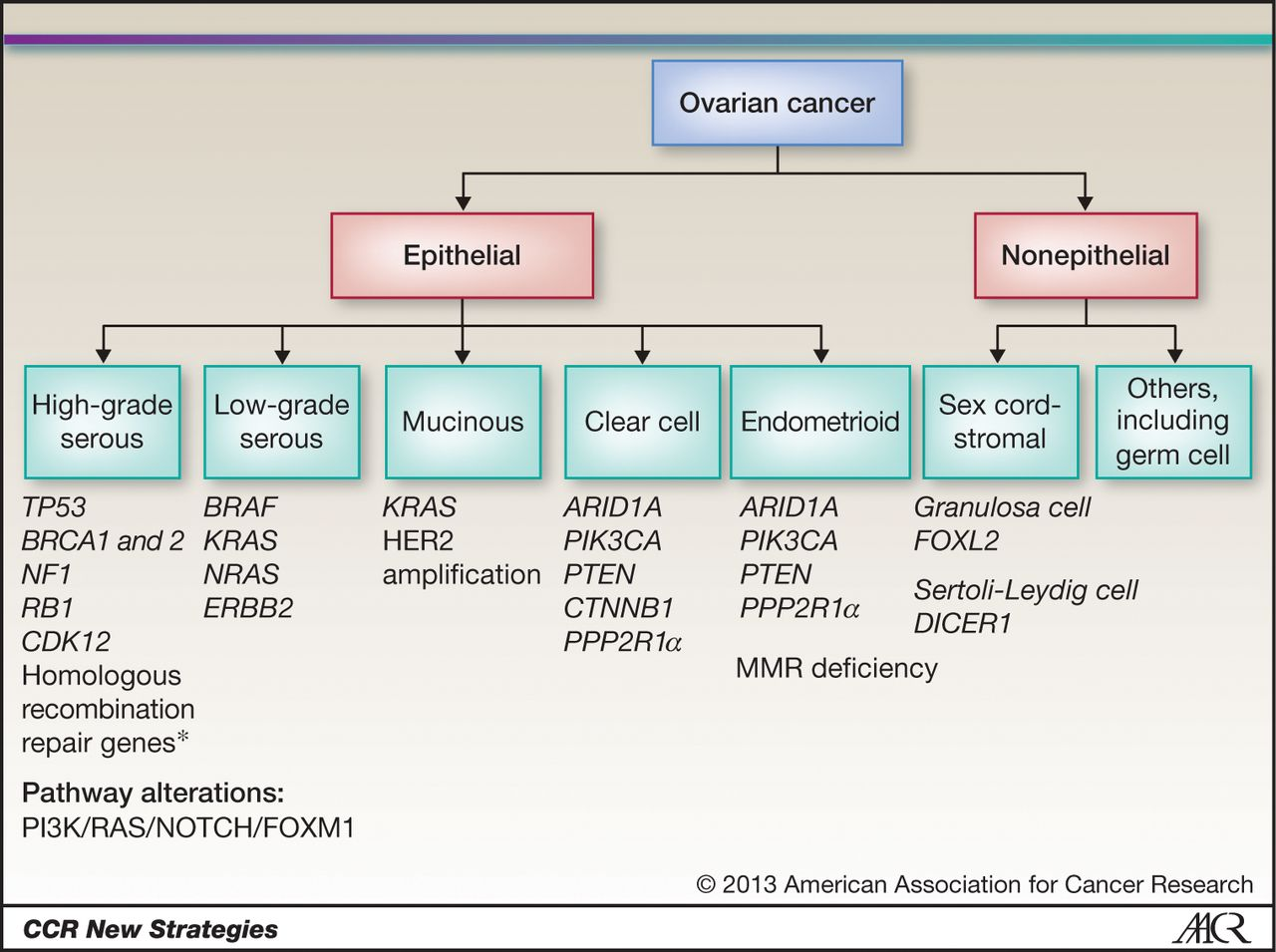 16+ Ovarian Cancer Types Epithelial Tumors  Gif